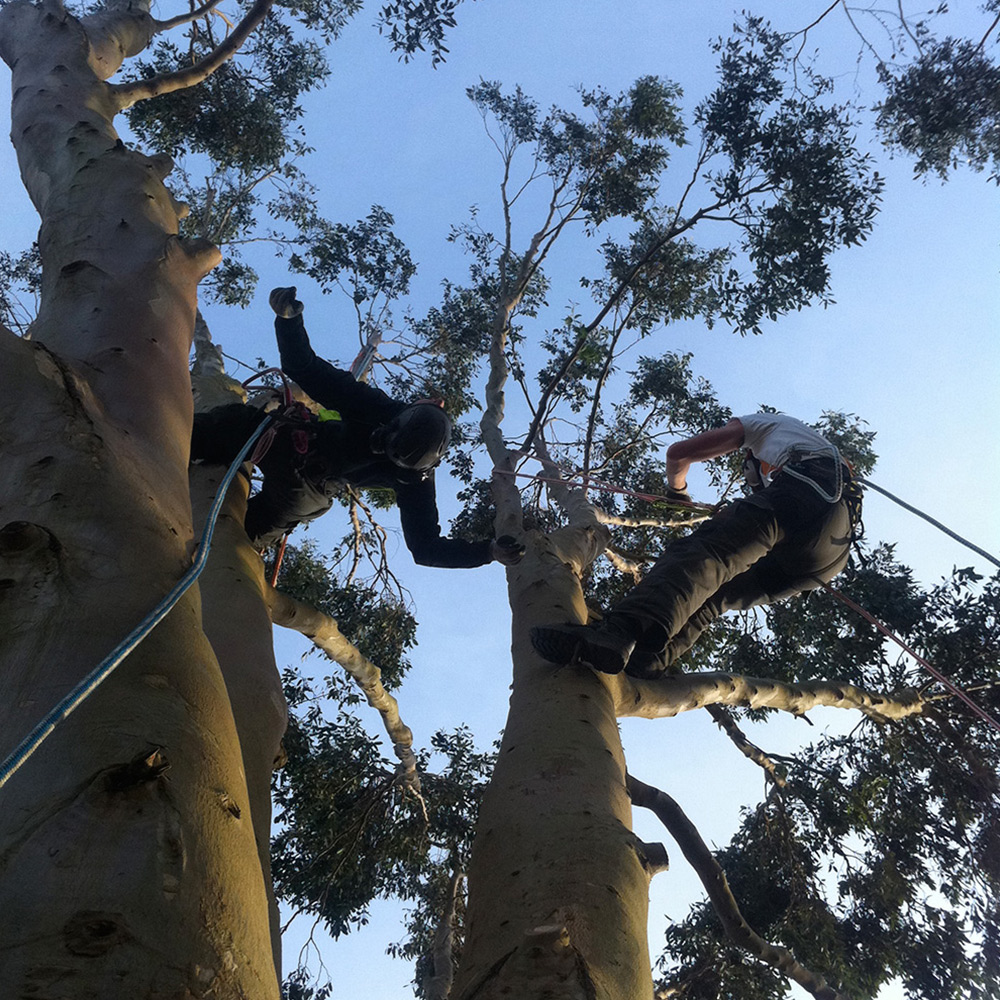 Gecko Tree Care